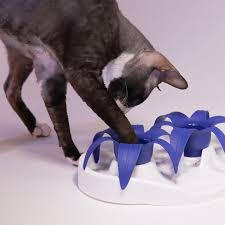 thin kat