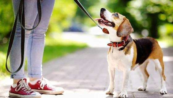 dog-care-services (4)